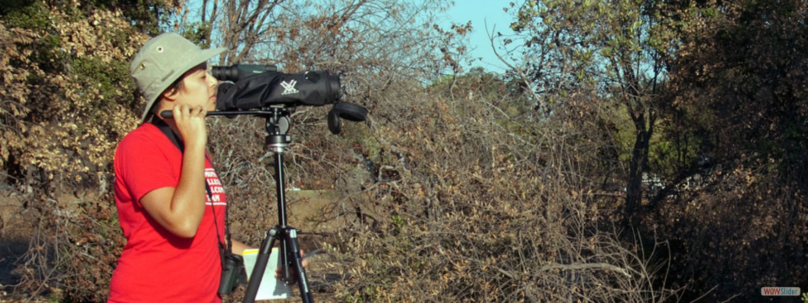 Pomona College Senior Research student observes Western Scrub-Jay behavior
