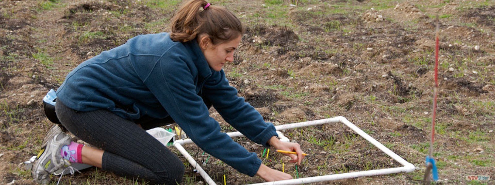 Scripps College student Charlotte Startin counts seedlings sprouting after a recent wildfire