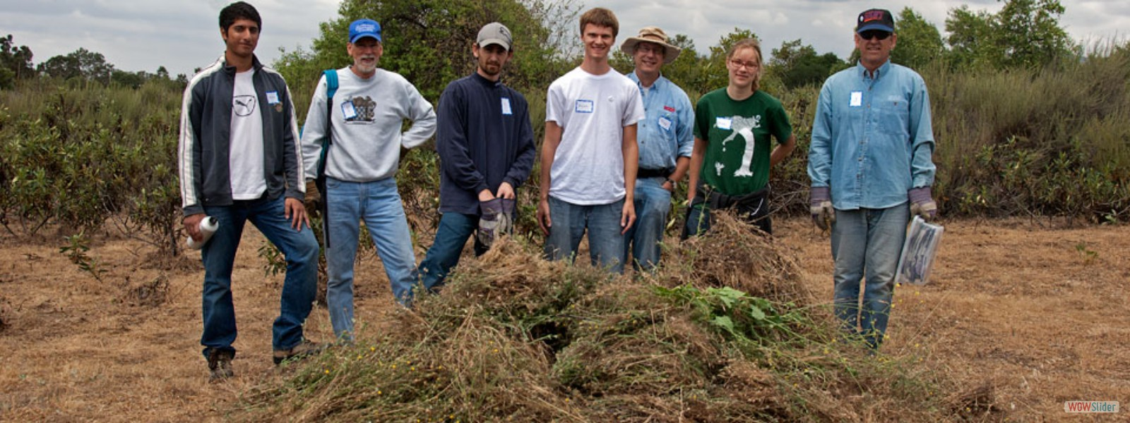 Volunteers with a pile of invasive Maltese Star Thistles